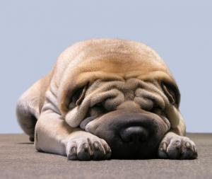gesunder-schlaf-schlafprobleme